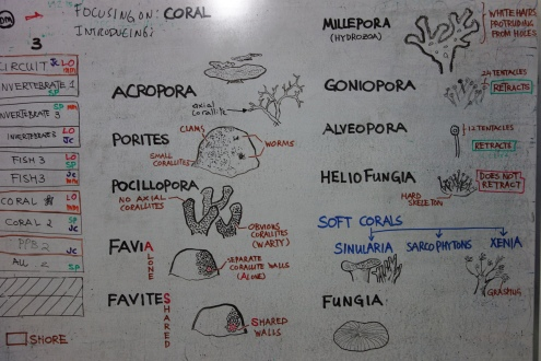 The different types of coral